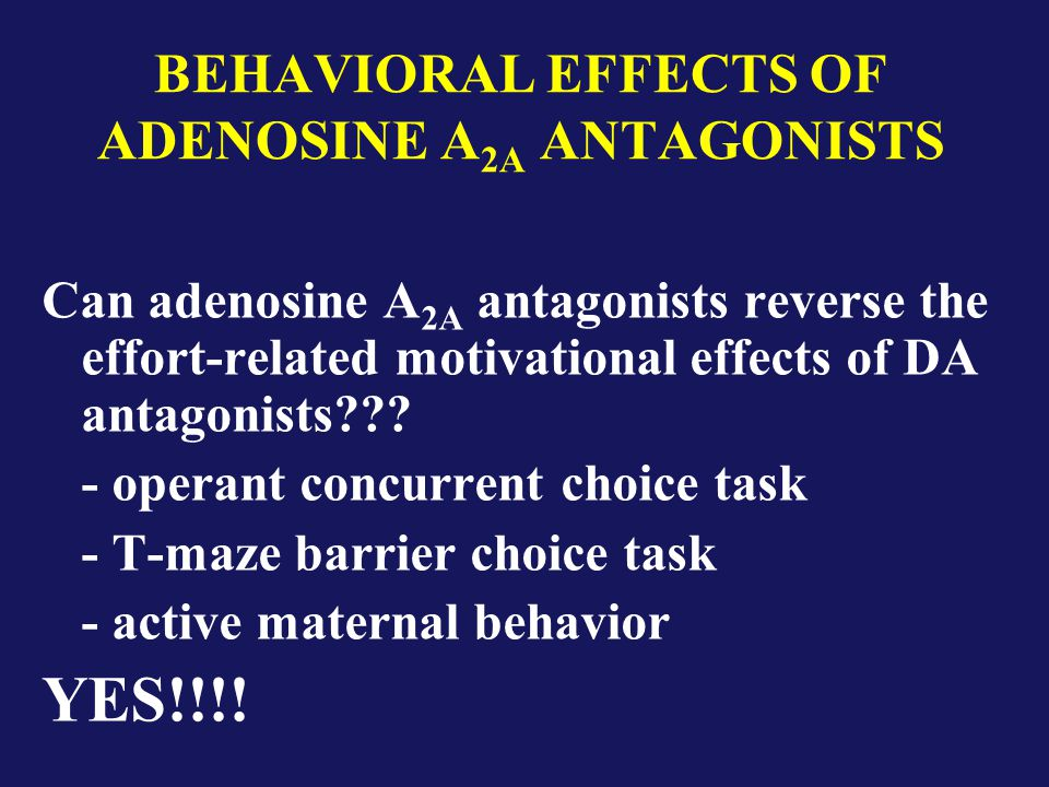 BEHAVIORAL EFFECTS OF ADENOSINE A 2A ANTAGONISTS Can adenosine A 2A antagonists reverse the effort-related motivational effects of DA antagonists??.