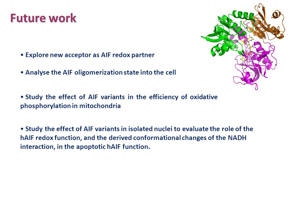Future work Study the effect of AIF variants in isolated nuclei to evaluate the role of the hAIF redox function, and the derived conformational change