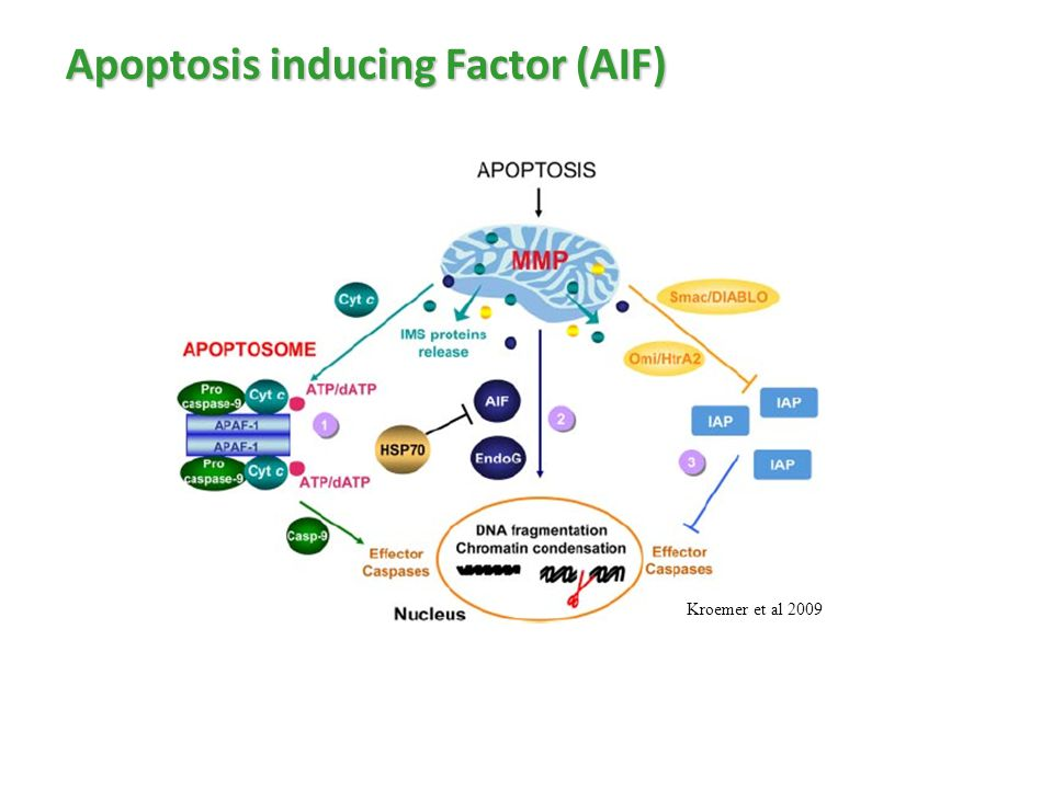 Apoptosis inducing Factor (AIF) Kroemer et al 2009