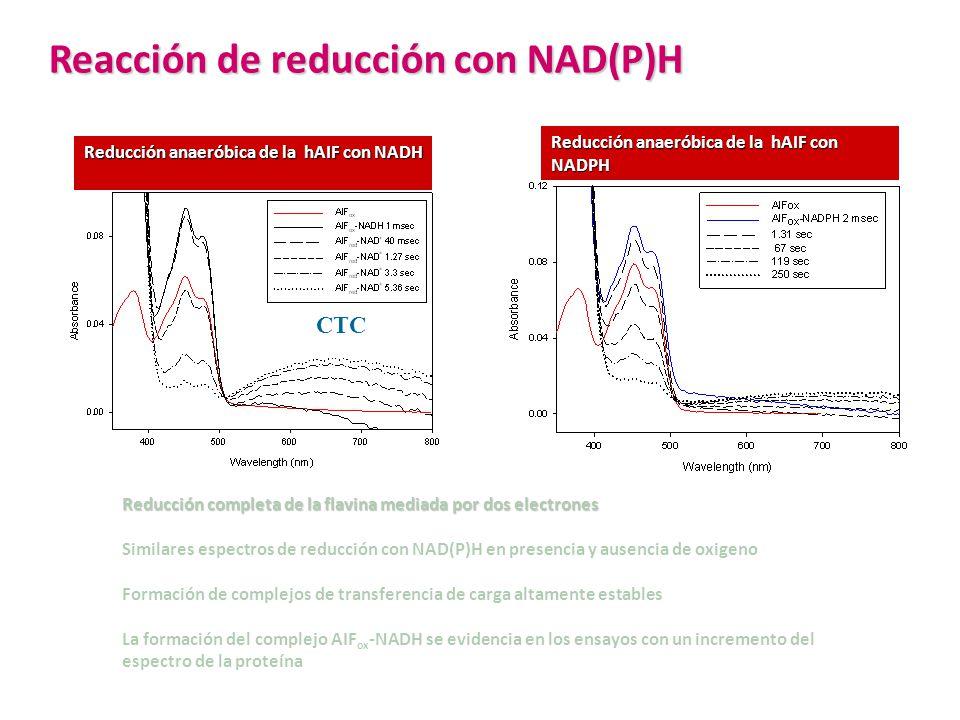 Reacción de reducción con NAD(P)H Reducción completa de la flavina mediada por dos electrones Similares espectros de reducción con NAD(P)H en presenci