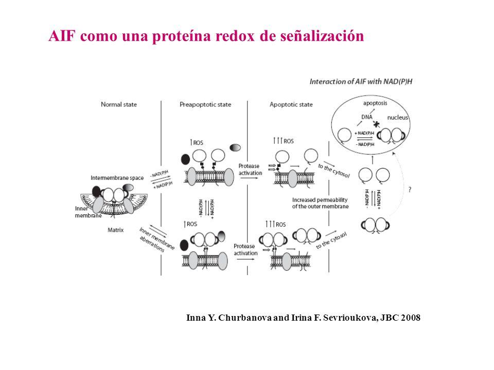 AIF como una proteína redox de señalización Inna Y. Churbanova and Irina F. Sevrioukova, JBC 2008