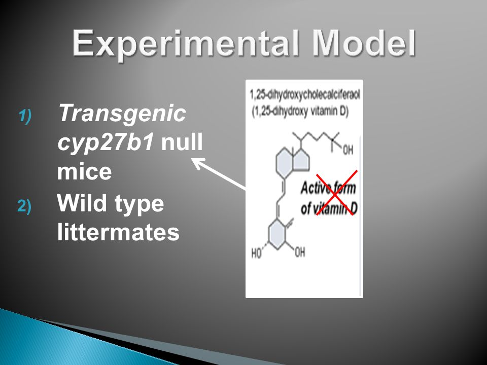 1) Transgenic cyp27b1 null mice 2) Wild type littermates