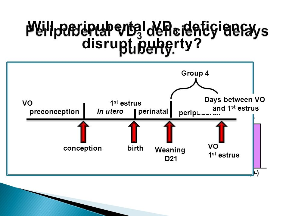 Will peripubertal VD 3 deficiency disrupt puberty.