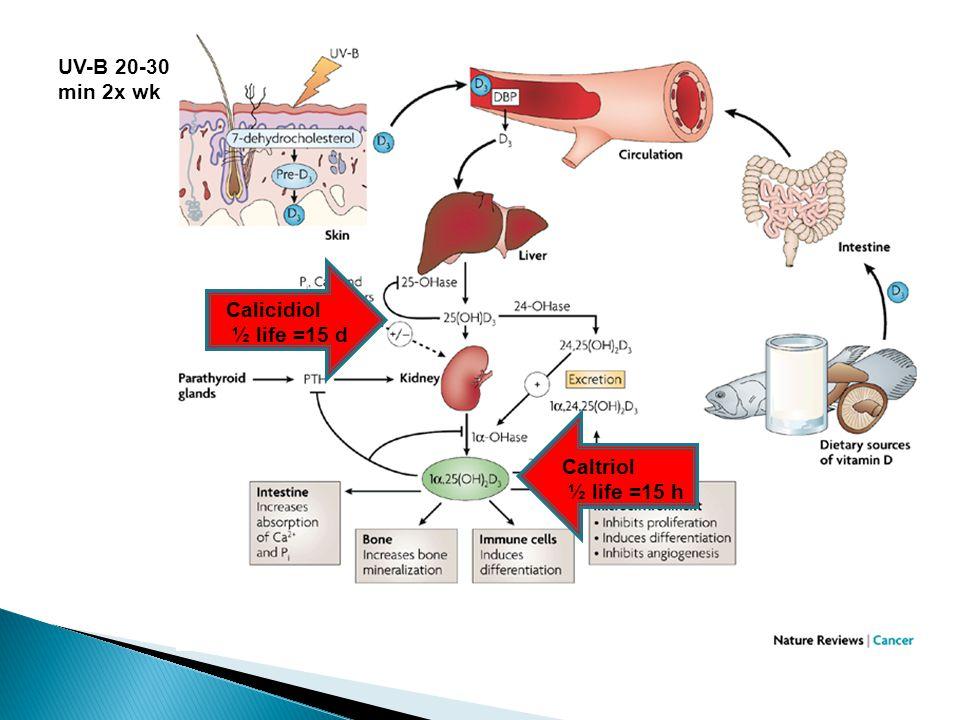 VD 3 + VD 3 - Peripubertal VD 3 deficiency does not affect GnRH neuron density