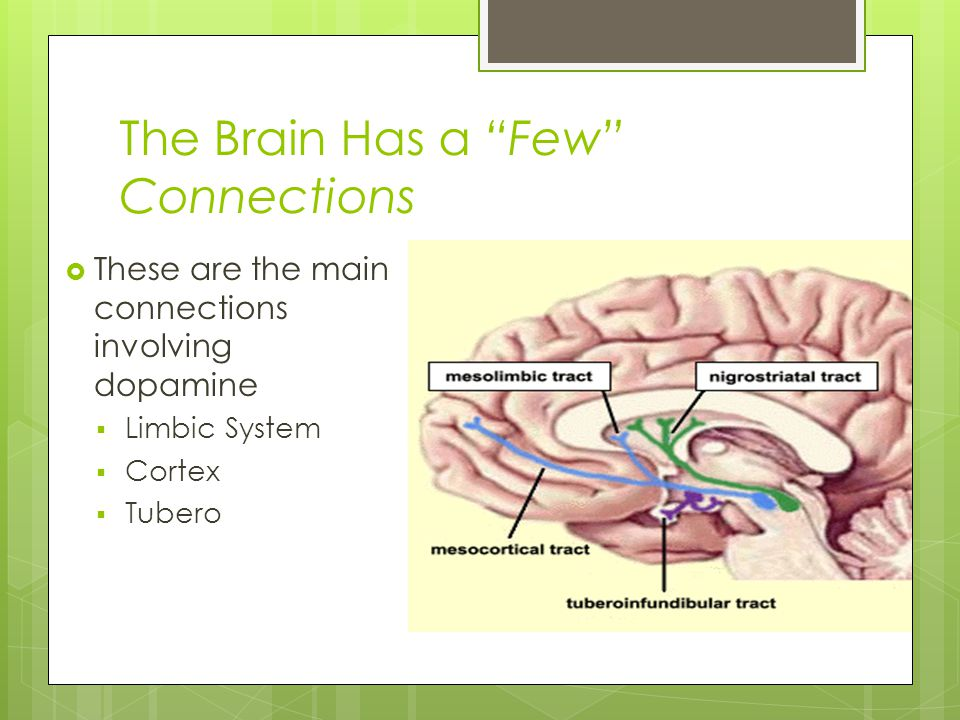 """The Brain Has a """"Few"""" Connections  These are the main connections involving dopamine  Limbic System  Cortex  Tubero"""
