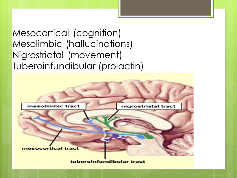 Mesocortical (cognition) Mesolimbic (hallucinations) Nigrostriatal (movement) Tuberoinfundibular (prolactin)