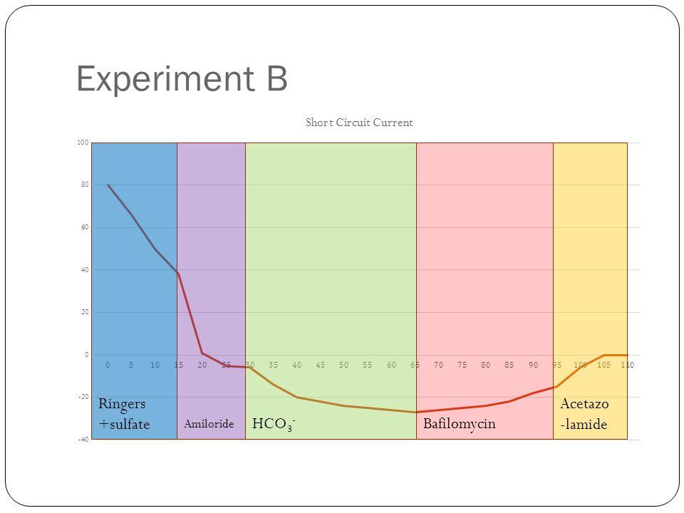 Experiment B Ringers +sulfate Amiloride HCO 3 - Bafilomycin Acetazo -lamide