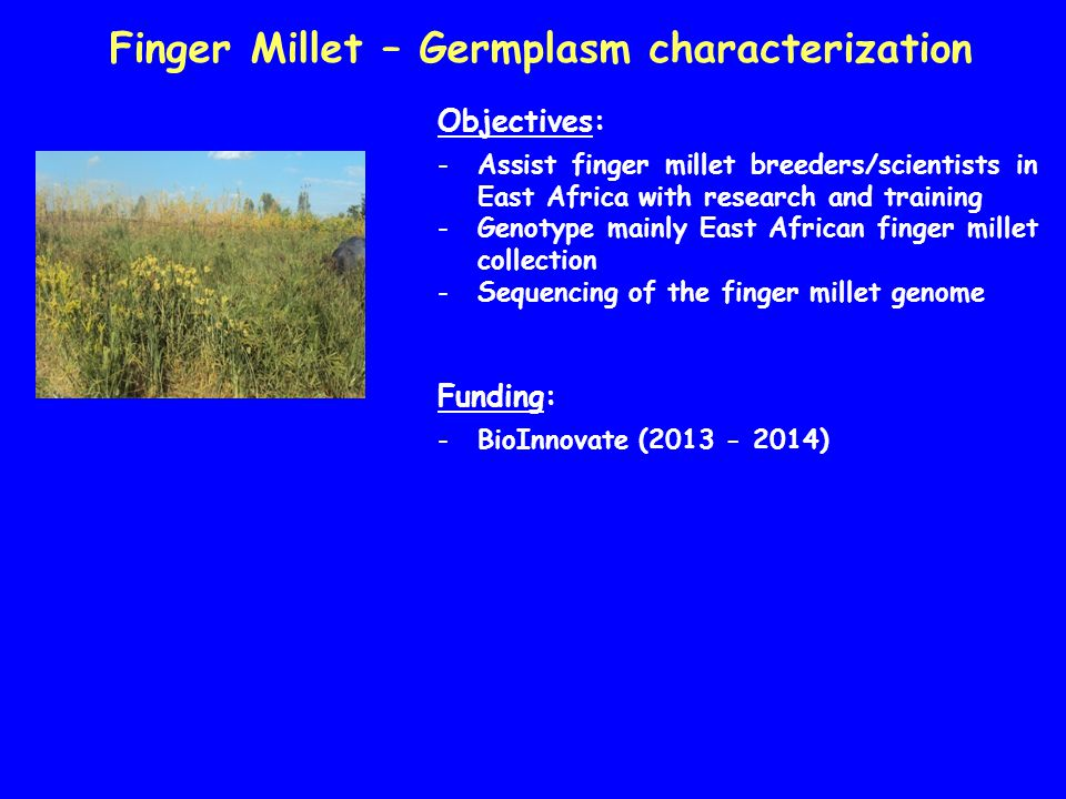 Finger Millet – Germplasm characterization Objectives: -Assist finger millet breeders/scientists in East Africa with research and training -Genotype m