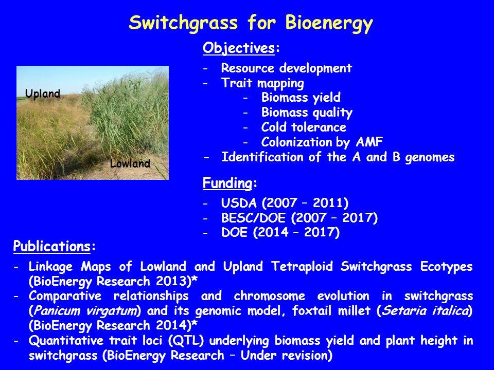 Switchgrass for Bioenergy Lowland Upland Objectives: -Resource development -Trait mapping -Biomass yield -Biomass quality -Cold tolerance -Colonizatio