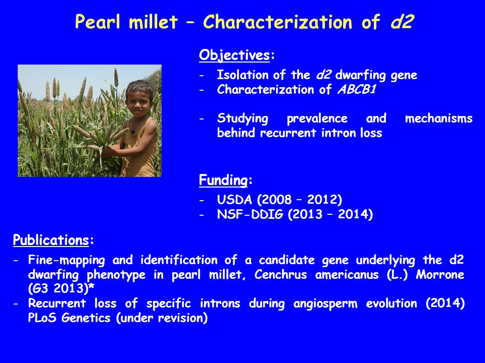 Seashore paspalum – Mapping salt tolerance Objectives: -Germplasm characterization -Mapping of salt tolerance -Effects of salt on gene expression Funding: -NSF-GRFP to Doug Eudy (2010 - 2014)