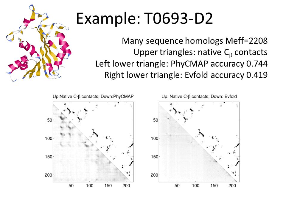 Example: T0701-D1 Many sequence homologs Meff=3300 Upper triangle: native C β contacts Left lower triangle: PhyCMAP accuracy 0.794 Right lower triangle: Evfold accuracy 0.444
