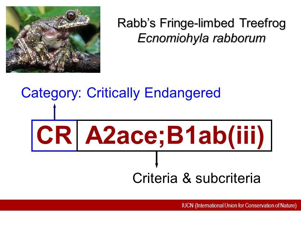 IUCN (International Union for Conservation of Nature) CR A2ace;B1ab(iii) Category: Critically Endangered Rabb's Fringe-limbed Treefrog Ecnomiohyla rab