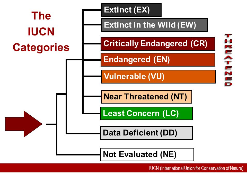 IUCN (International Union for Conservation of Nature) The IUCN Categories Not Evaluated (NE) Near Threatened (NT) Data Deficient (DD) Endangered (EN)