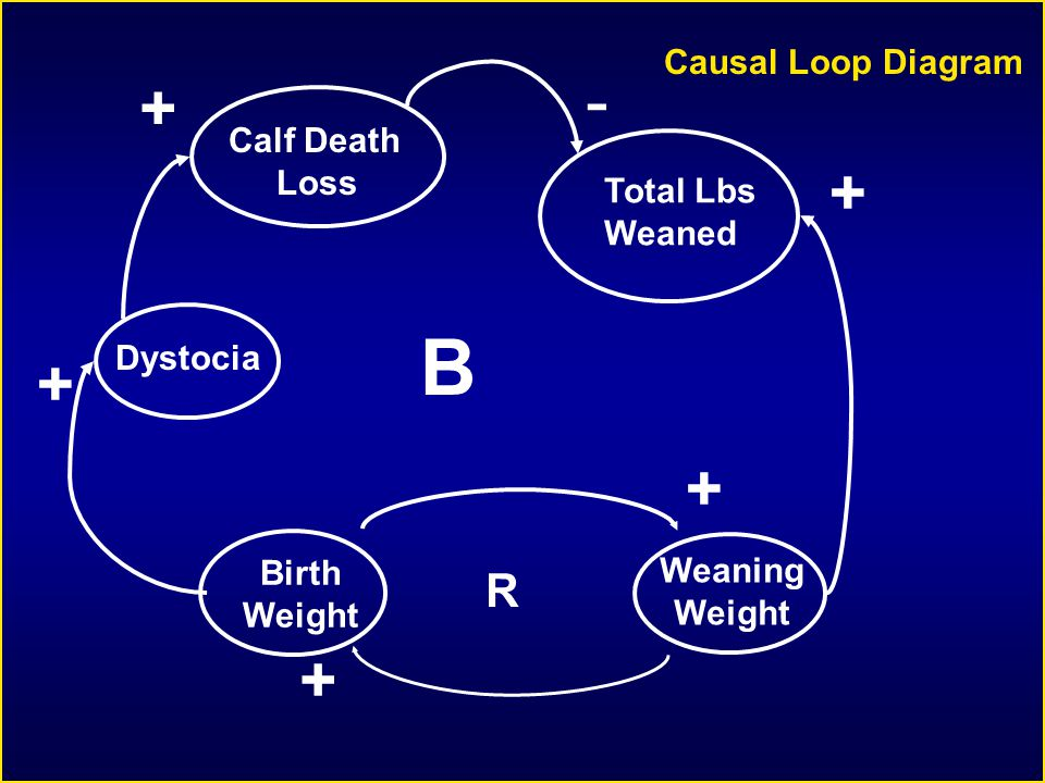 Dystocia + Weaning Weight Total Lbs Weaned + - Calf Death Loss + B Causal Loop Diagram Birth Weight + + R