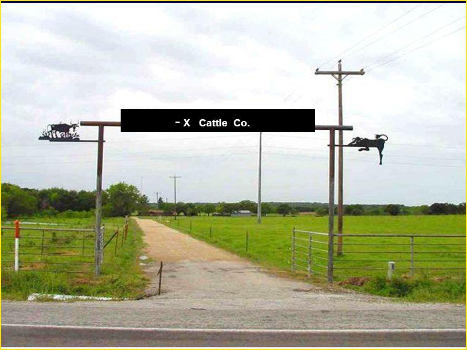- X Cattle Co.