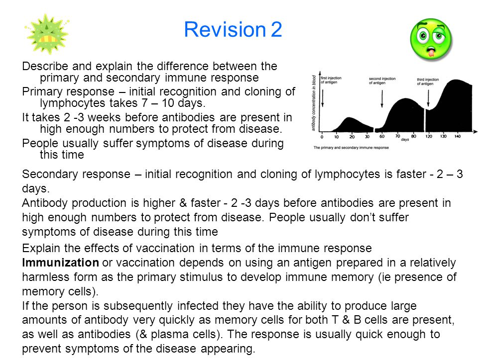 Revision 2 Describe and explain the difference between the primary and secondary immune response Primary response – initial recognition and cloning of