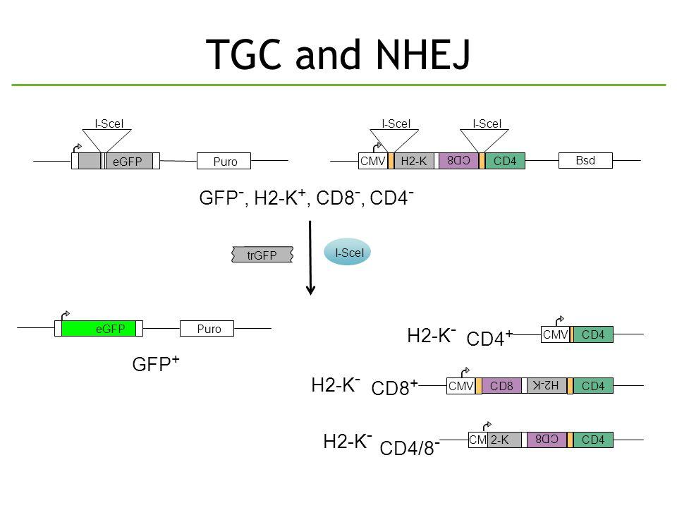 TGC and NHEJ PuroeGFP I-SceI trGFP I-SceI PuroeGFP Bsd H2-K CD8 I-SceI CD4 I-SceI CMV GFP -, H2-K +, CD8 -, CD4 - GFP + CMV CD4 CD4 + H2-K CD8 CD4 CMV CD8 + CD8 CD4 CM H2-K - 2-K H2-K - CD4/8 -