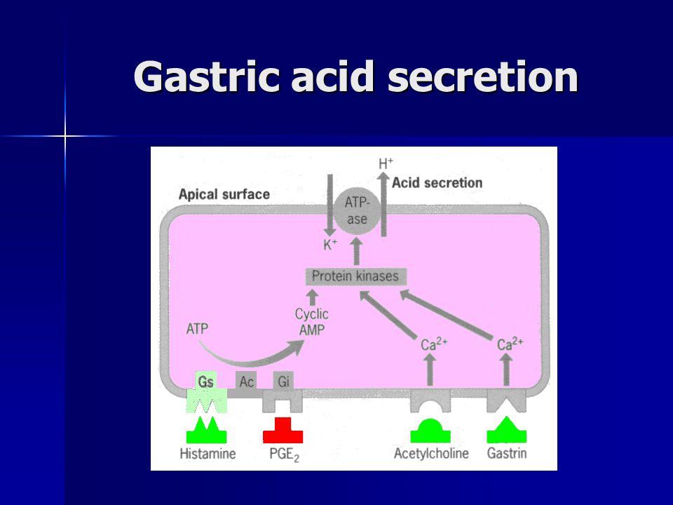 Gastric acid secretion