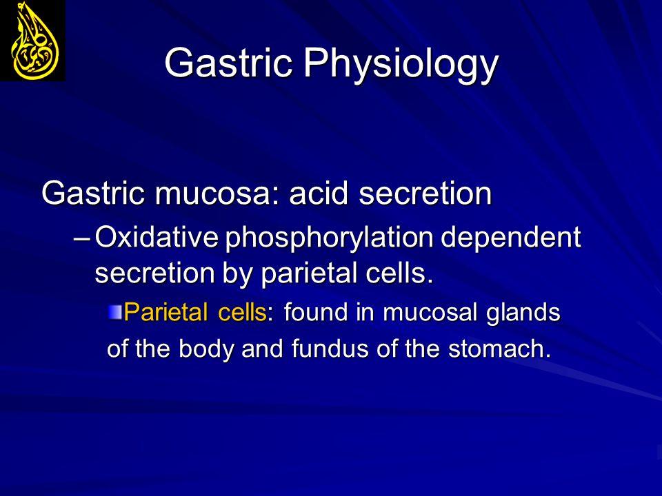 Gastric Physiology Gastric mucosa: acid secretion –Oxidative phosphorylation dependent secretion by parietal cells. Parietal cells: found in mucosal g