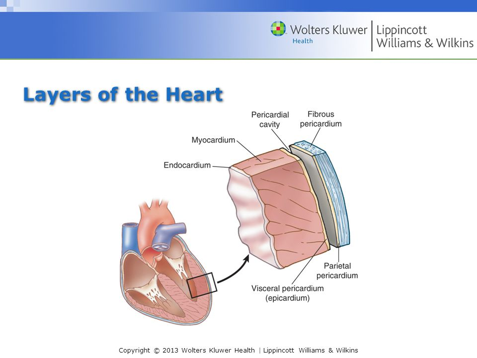 Copyright © 2013 Wolters Kluwer Health | Lippincott Williams & Wilkins Layers of the Heart