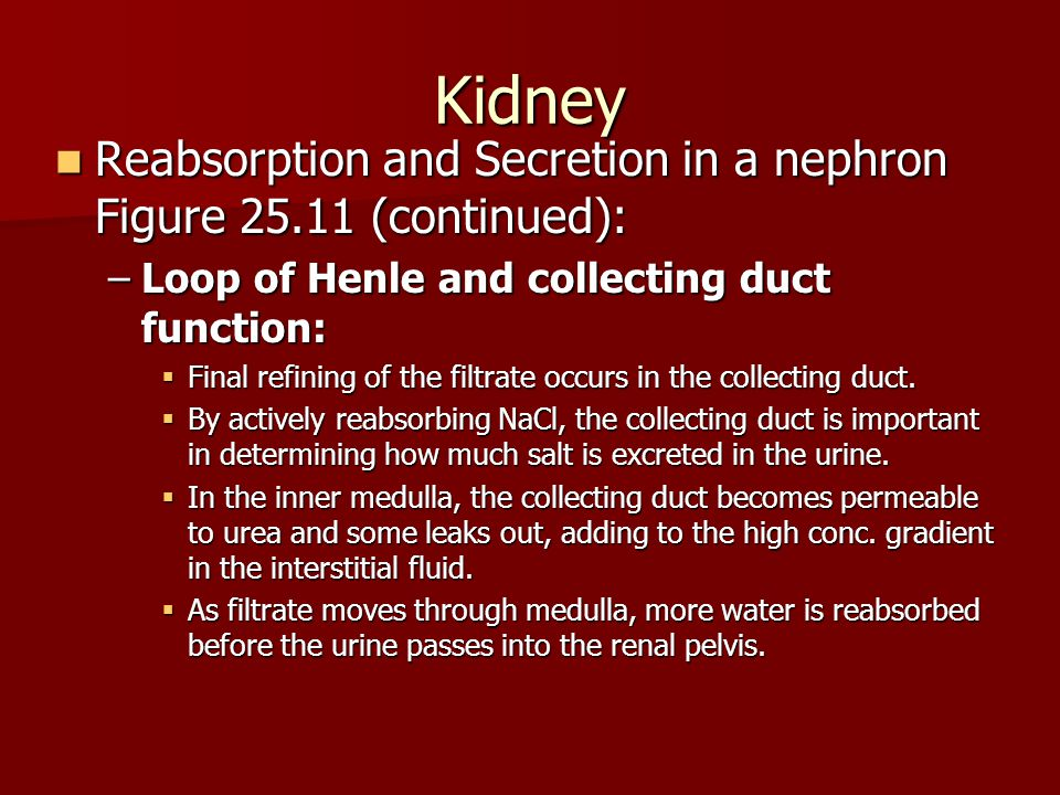 Kidney Reabsorption and Secretion in a nephron Figure 25.11 (continued): Reabsorption and Secretion in a nephron Figure 25.11 (continued): –Loop of He
