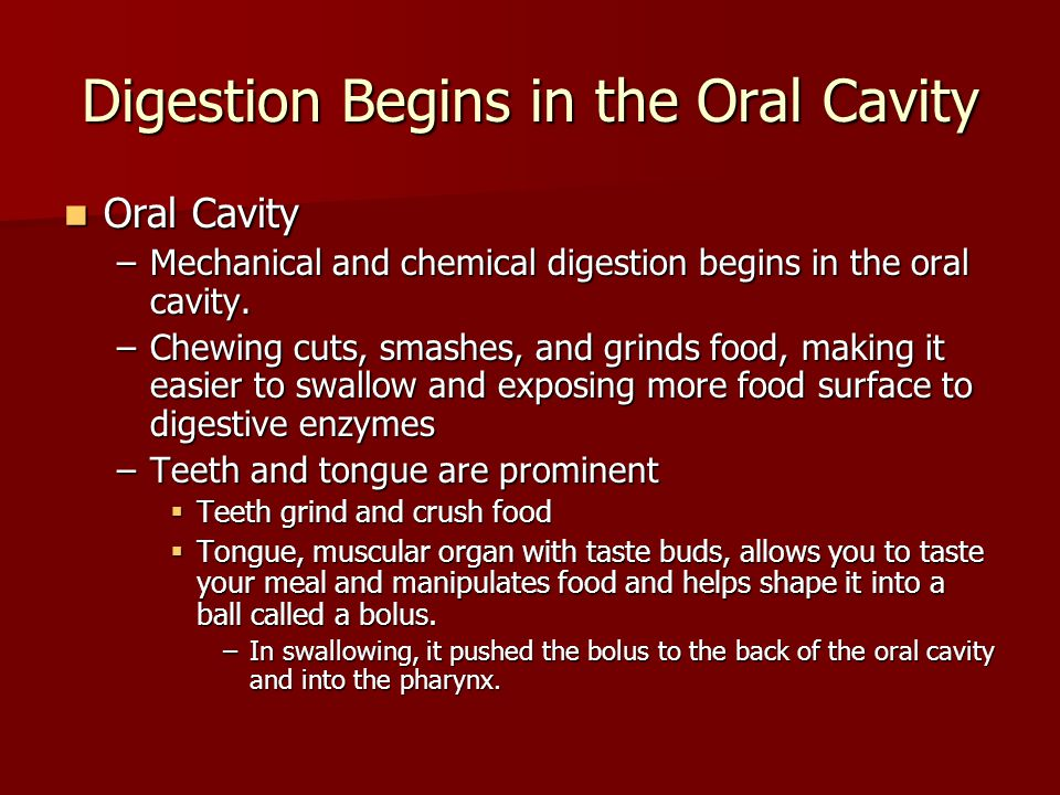 Digestion Begins in the Oral Cavity Oral Cavity Oral Cavity –Mechanical and chemical digestion begins in the oral cavity. –Chewing cuts, smashes, and