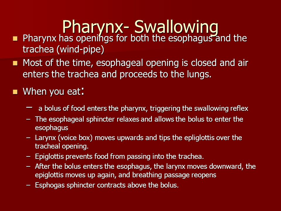 Pharynx- Swallowing Pharynx has openings for both the esophagus and the trachea (wind-pipe) Pharynx has openings for both the esophagus and the trache