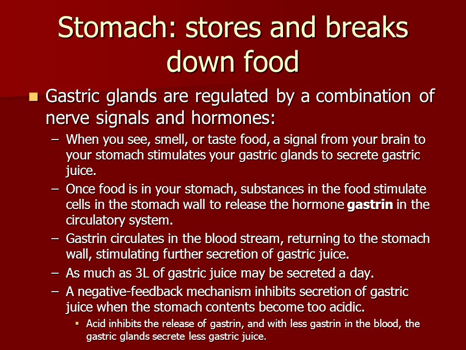 Stomach: stores and breaks down food Gastric glands are regulated by a combination of nerve signals and hormones: Gastric glands are regulated by a co