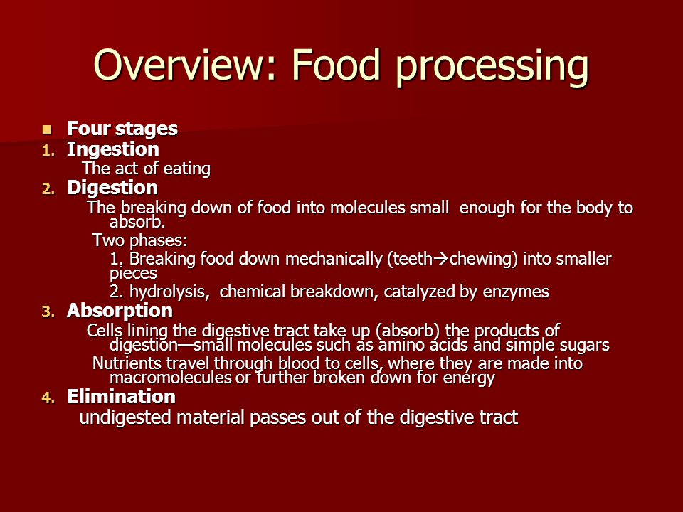 Overview: Food processing Four stages Four stages 1. Ingestion The act of eating The act of eating 2. Digestion The breaking down of food into molecul