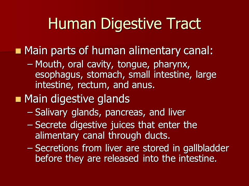 Human Digestive Tract Main parts of human alimentary canal: Main parts of human alimentary canal: –Mouth, oral cavity, tongue, pharynx, esophagus, sto