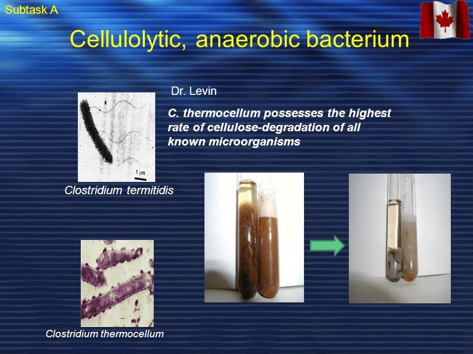 Cellulolytic, anaerobic bacterium Clostridium thermocellum Clostridium termitidis C.