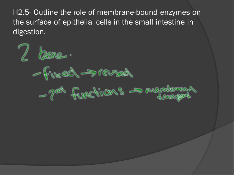 H2.5- Outline the role of membrane-bound enzymes on the surface of epithelial cells in the small intestine in digestion.