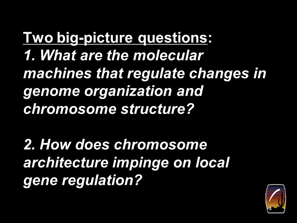 5 pairing Pairing is the close physical proximity of homologous chromosomes and/or specific homologous sequences.