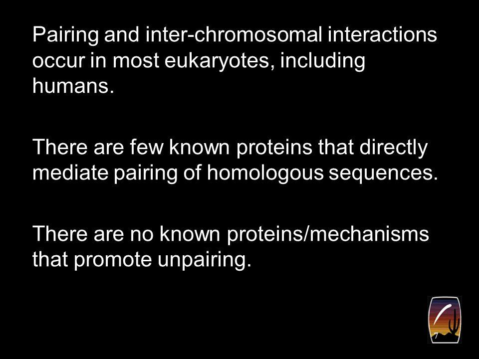 18 Our working model: Nurse cell polytenes undergo a condensin regulated unpairing step.