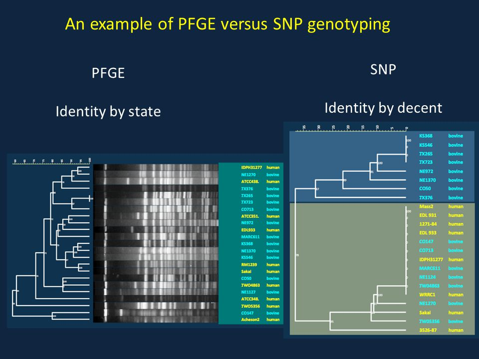 An example of PFGE versus SNP genotyping PFGE Identity by state SNP Identity by decent