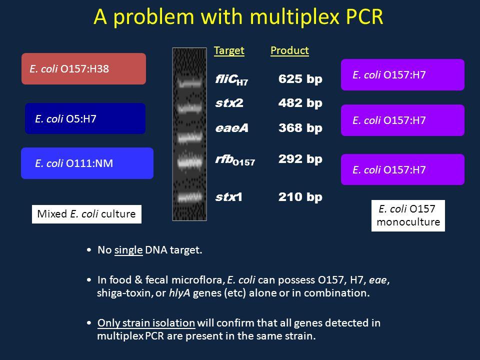 A problem with multiplex PCR E. coli O5:H7 E. coli O111:NM E. coli O157:H38 Mixed E. coli culture E. coli O157 monoculture E. coli O157:H7 fliC H7 625