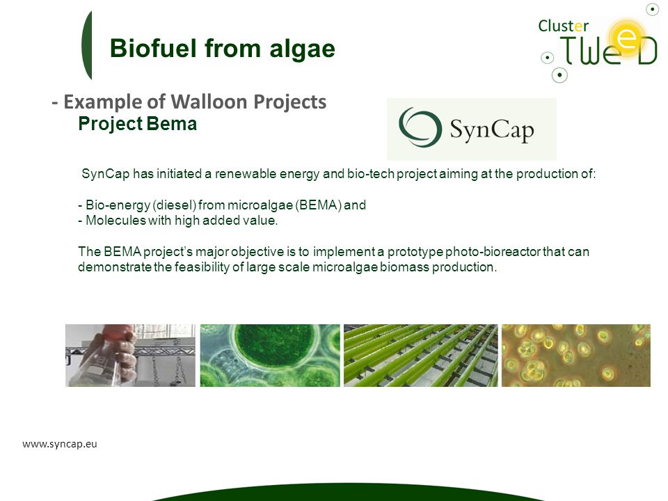 Project Bema SynCap has initiated a renewable energy and bio-tech project aiming at the production of: - Bio-energy (diesel) from microalgae (BEMA) and - Molecules with high added value.