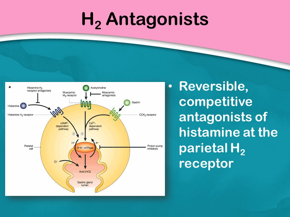H 2 Antagonists Reversible, competitive antagonists of histamine at the parietal H 2 receptor