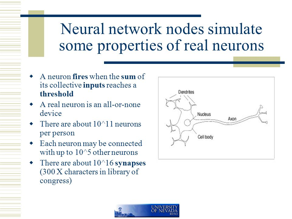 Neural network nodes simulate some properties of real neurons  A neuron fires when the sum of its collective inputs reaches a threshold  A real neuron is an all-or-none device  There are about 10^11 neurons per person  Each neuron may be connected with up to 10^5 other neurons  There are about 10^16 synapses (300 X characters in library of congress)