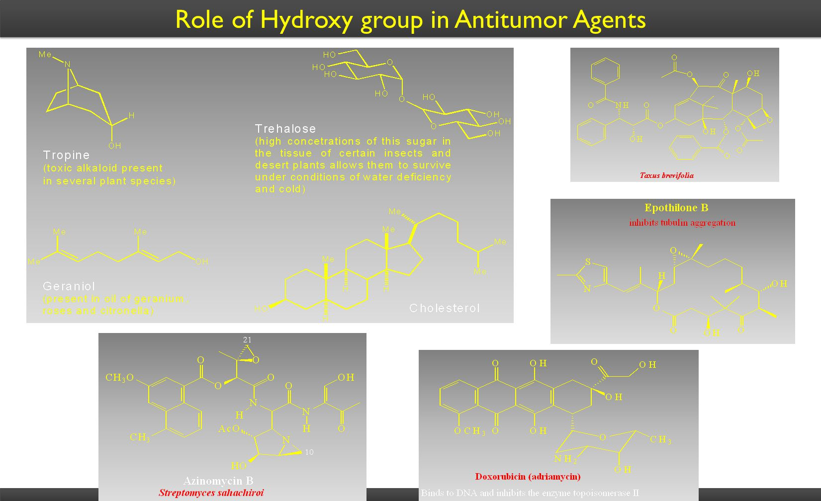 Role of Hydroxy group in Antitumor Agents