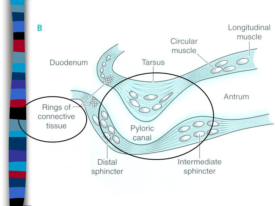Chronic gastritis B
