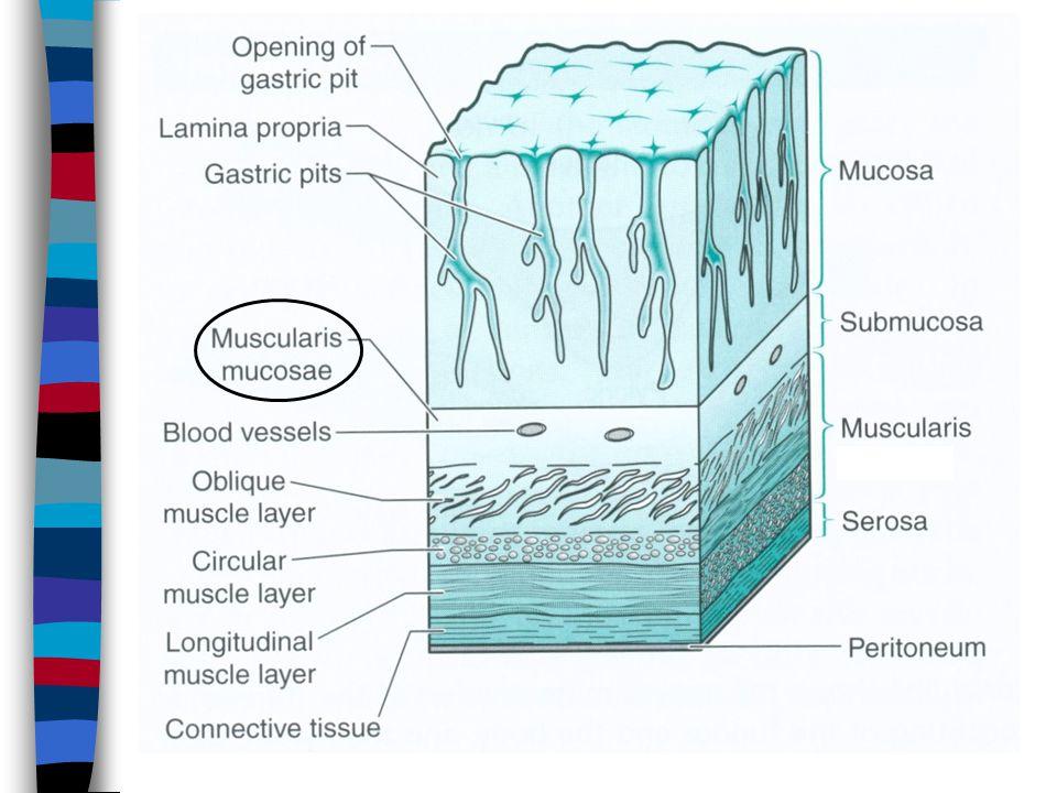 Perforation – free intraperitoneal air