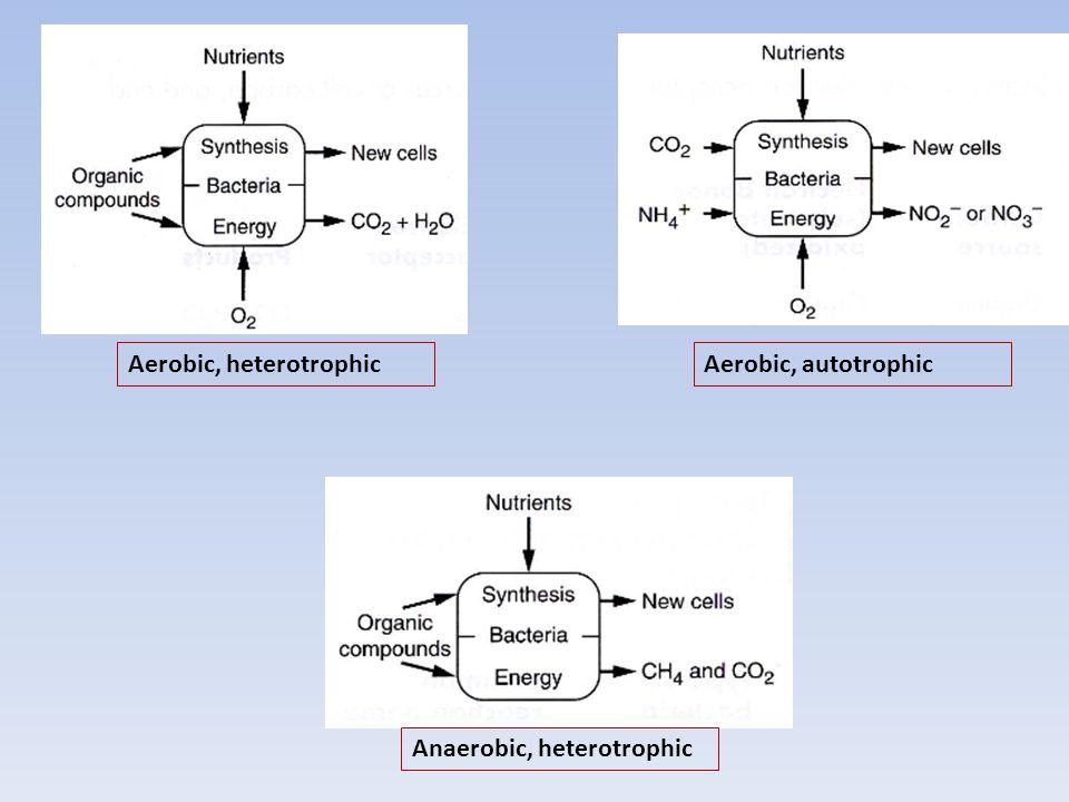 Aerobic, heterotrophicAerobic, autotrophic Anaerobic, heterotrophic