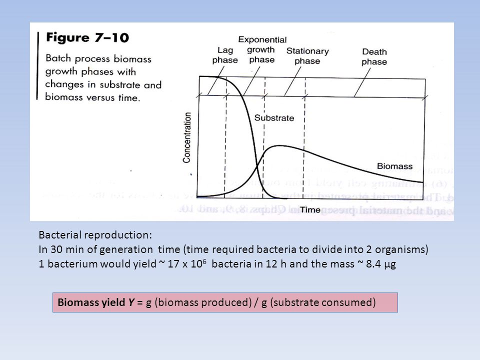 Bacterial reproduction: In 30 min of generation time (time required bacteria to divide into 2 organisms) 1 bacterium would yield ~ 17 x 10 6 bacteria in 12 h and the mass ~ 8.4 µg Biomass yield Y = g (biomass produced) / g (substrate consumed)