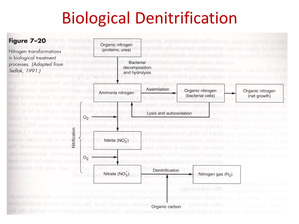Biological Denitrification