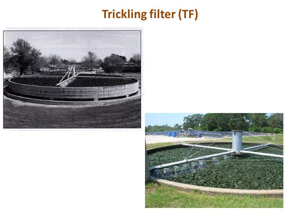 Trickling filter (TF)