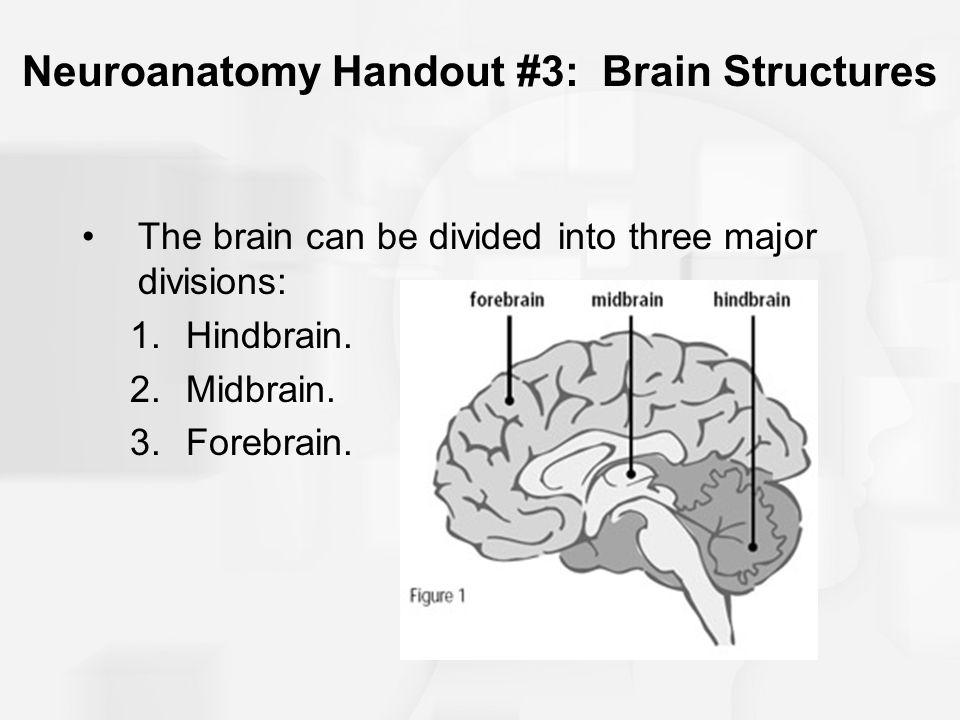 Neuroanatomy Handout #3: Brain Structures The brain can be divided into three major divisions: 1.Hindbrain. 2.Midbrain. 3.Forebrain.