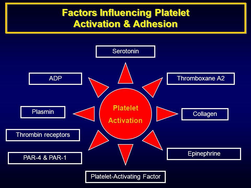 Factors Influencing Platelet Activation & Adhesion Serotonin Epinephrine Collagen Platelet-Activating Factor Plasmin ADP Thrombin receptors PAR-4 & PAR-1 Thromboxane A2 Platelet Activation