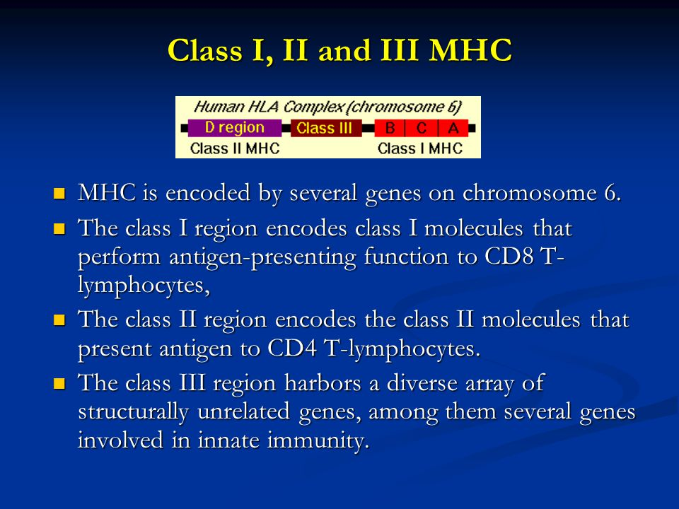 Class I MHC Class I molecules are composed of two polypeptide chains; one encoded by the BCA region and another (ß2-microglobulin) that is encoded elsewhere.