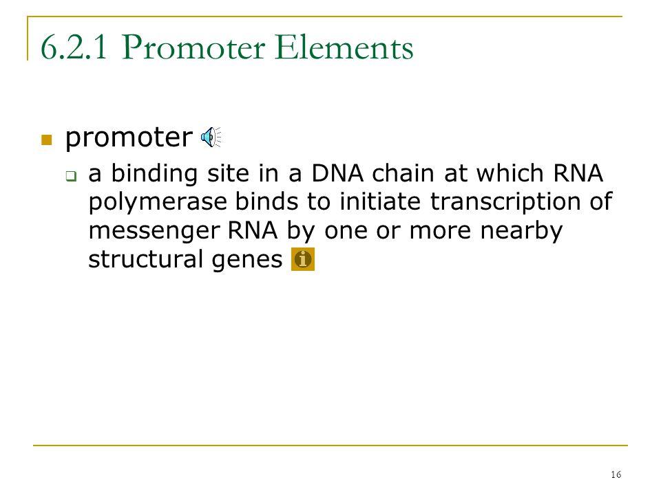 15 6.2 Prokaryotic Gene Structure